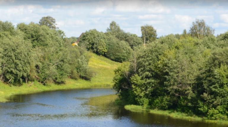 Дрозденко заявил о необходимости санитарных рубок леса