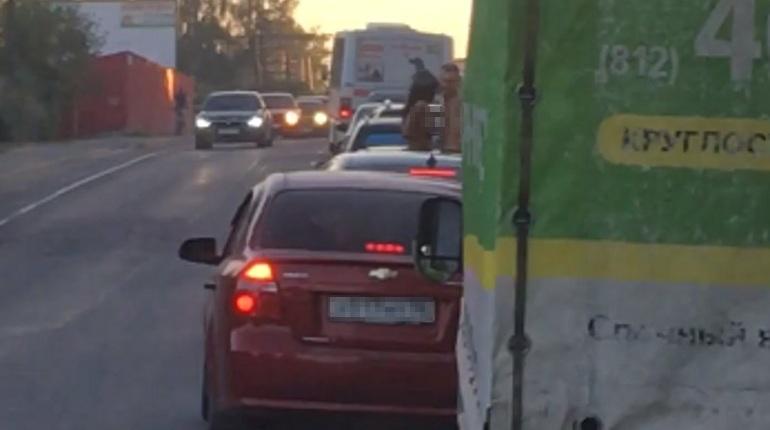 Голая пара нашла, как скоротать время в пробке на Токсовском шоссе