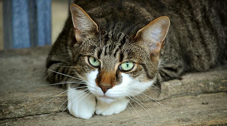 Кота-робинзона нашли на необитаемом острове на Ладоге