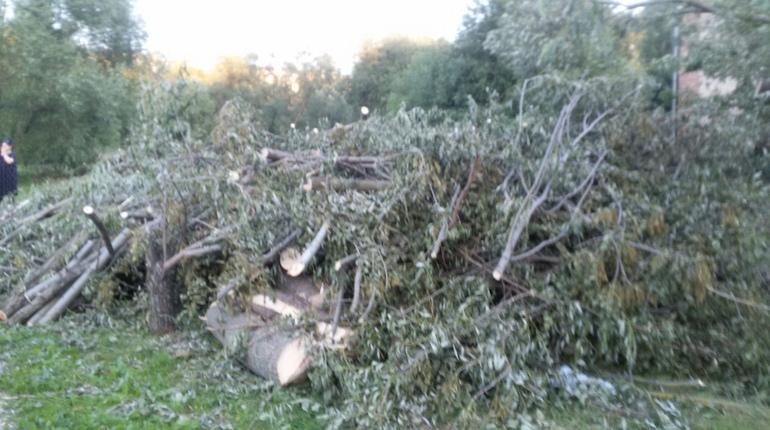 В Красногвардейском районе начали массово вырубать деревья