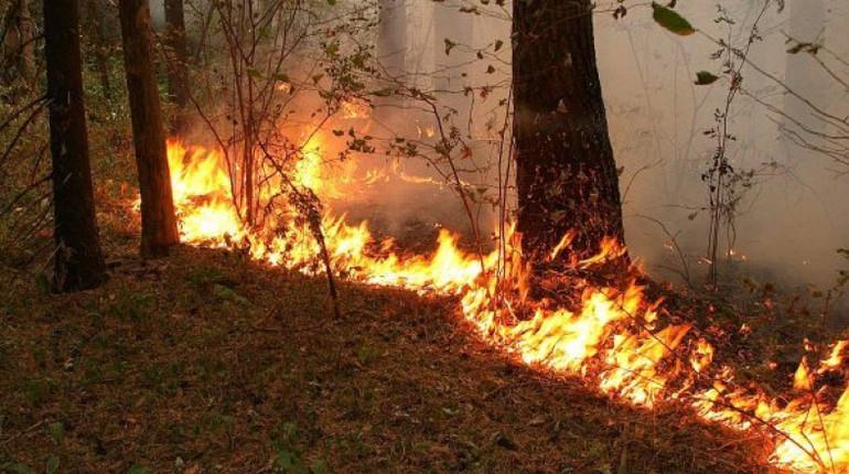 В Финляндии из-за пожара под угрозой национальный парк