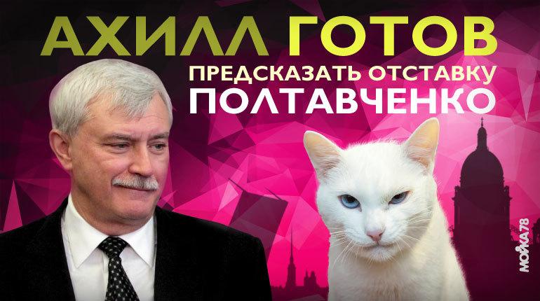 Кот Ахилл готов предсказать отставку Полтавченко