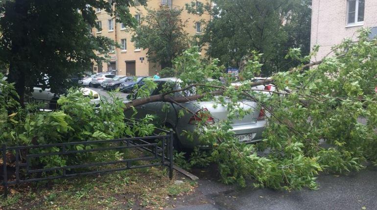 На перекрестке Малого и Шевченко еще одно дерево смяло машину
