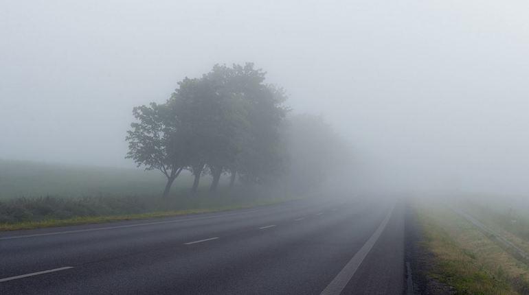 28-градусная жара и ливни с туманом «поселились» в Ленобласти