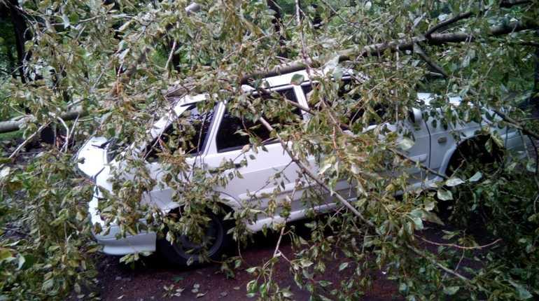 В Московском районе начался «деревопад»