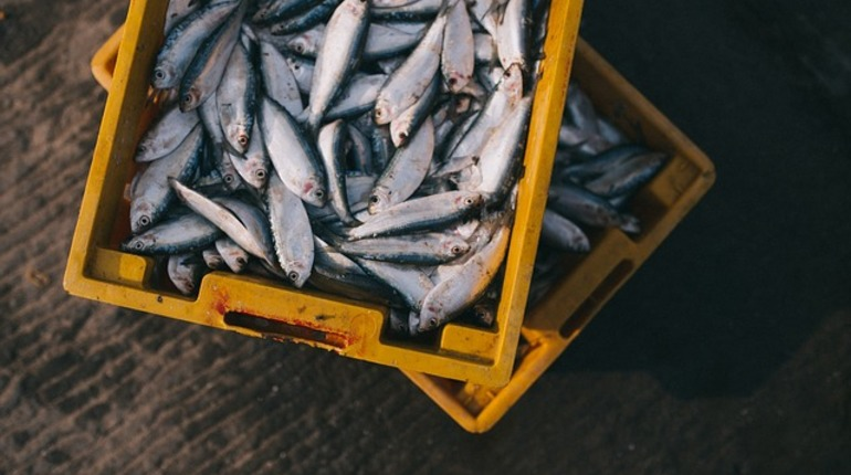В Петербурге за миллионные долги арестовали имущество рыбного завода