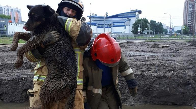 В Петербурге спасатели вытащили застрявшую в песке собаку