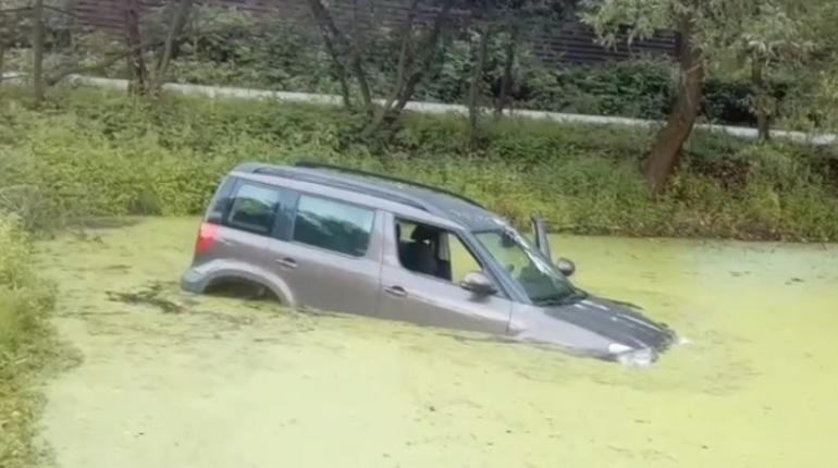 В Горелово Yeti искупался в заболоченном пруду