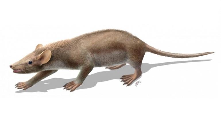 Ученые из Петербурга нашли останки животных времен динозавров