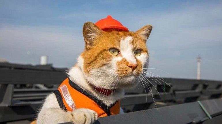 Ученые выяснили: кошки заражают людей бизнесом