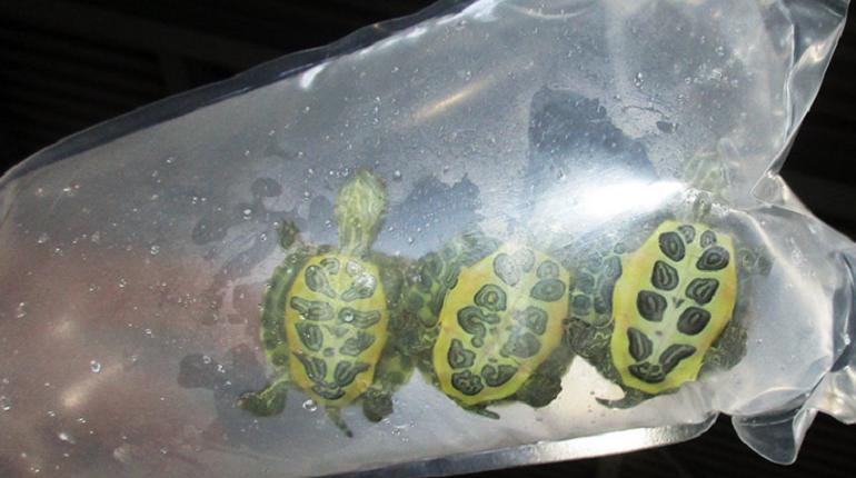 В Хабаровск из Пулково вылетели 10 лягушек и 3 черепахи