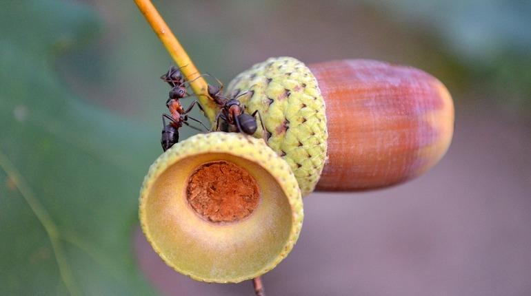Ученые выяснили, как муравьи разделились на рабов и королев