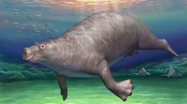 Таинственная окаменелость оказалась костью морского бегемота