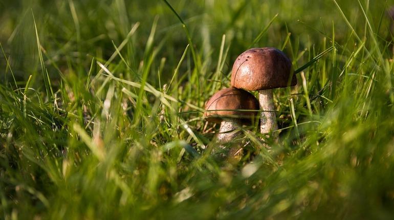 В лесу под Гатчиной нашли тела двух грибников.