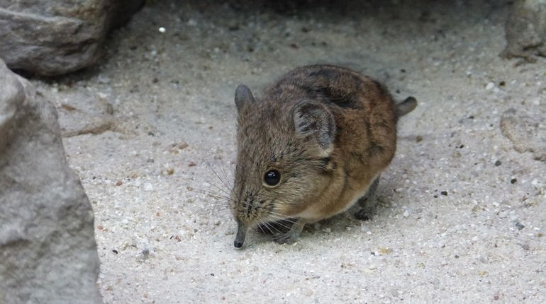 Петербургские ученые откопали примитивное млекопитающее в Якутии