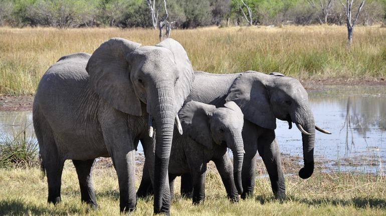 Цена слона: траты Петербурга на новый зоопарк превысили миллиард