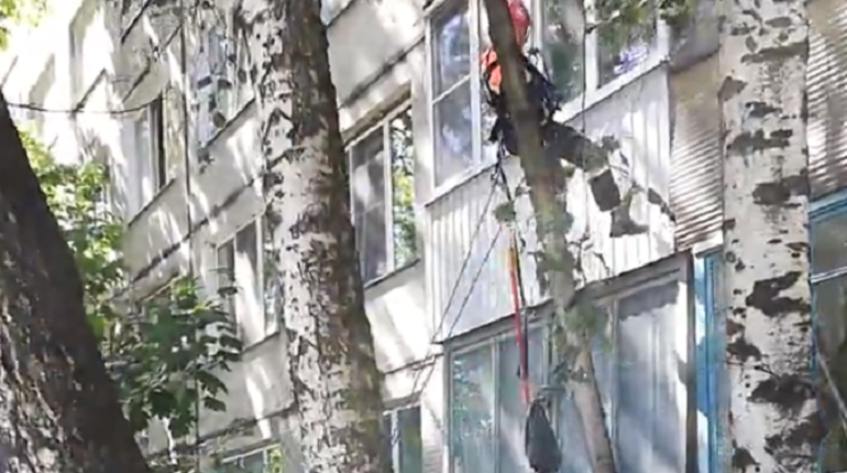 В Купчино спасли кота, два дня сидевшего на дереве