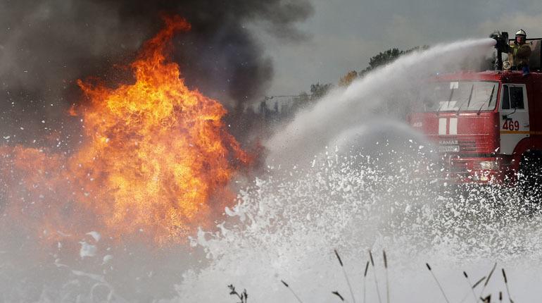 Спасатели МЧС тушат лесной пожар в Кингисеппском районе Ленобласти
