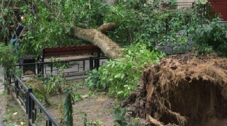 В субботу в Северную столицу вернется ураган. 11 августа ожидается усиление юго-западного и западного ветра до 17 м/с.