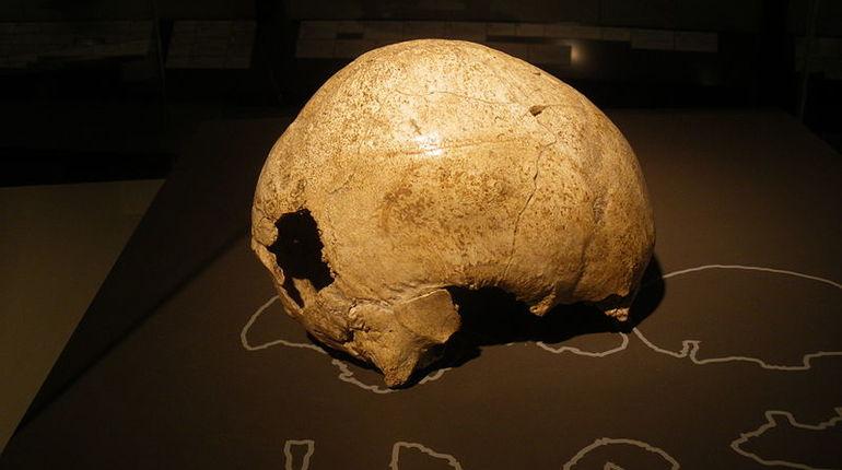 Ученые: древних людей сгубила собственная лень