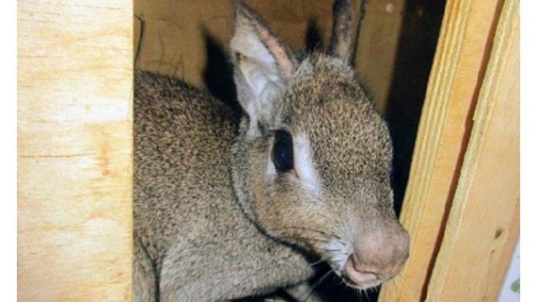 К маленьким петербуржцам прилетели родственники зайца