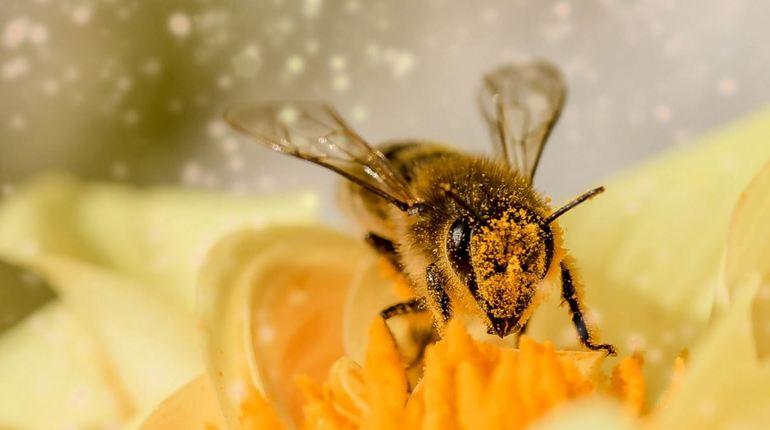 Международная группа исследователей выяснила, что пчелы и осы способны запомнить лицо человека, а потом узнать его.