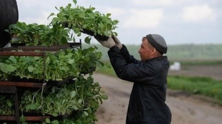 На развитие фермерства Ленобласти выделили 158 миллионов рублей.