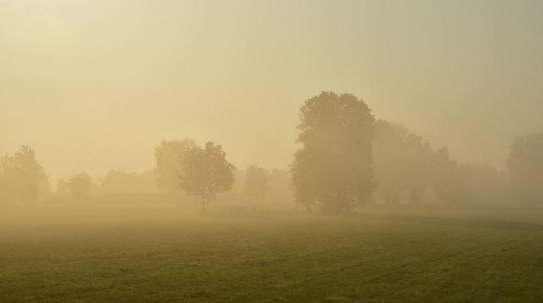 Жаркий день в Ленобласти начнется с тумана
