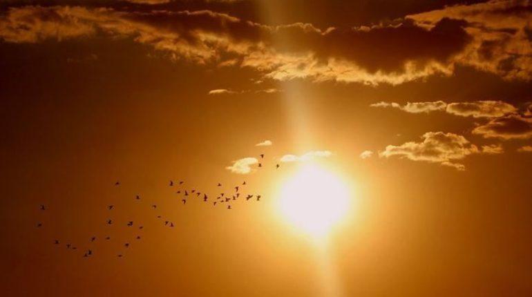 18 августа в Ленобласти ожидается до 23-28 градусов, в некоторых районах пройдут дожди.
