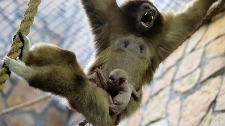 В субботу, 18 августа, Ленинградский зоопарк отмечает свой 153-й день рождения. Для посетителей сотрудники подготовили специальную программу. В зоопарке проведут показательные кормления и даже откроют те двери, которые закрыты для гостей в обычные дни.