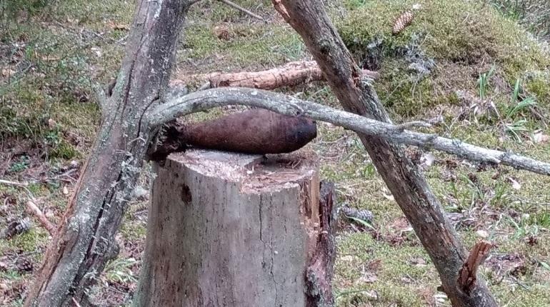 В Выборгском районе Ленобласти обнаружили снаряд времен войны. Взрывное устройство оказалось на одном из пней.