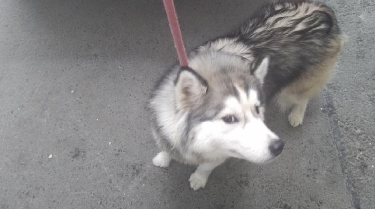 В Петербурге с начала года стерилизовали 699 бродячих собак