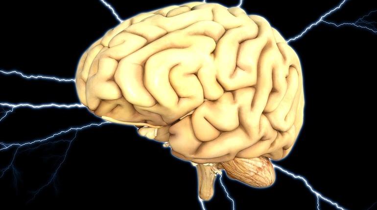 Ученые: мозг человека переключается четыре раза в секунду