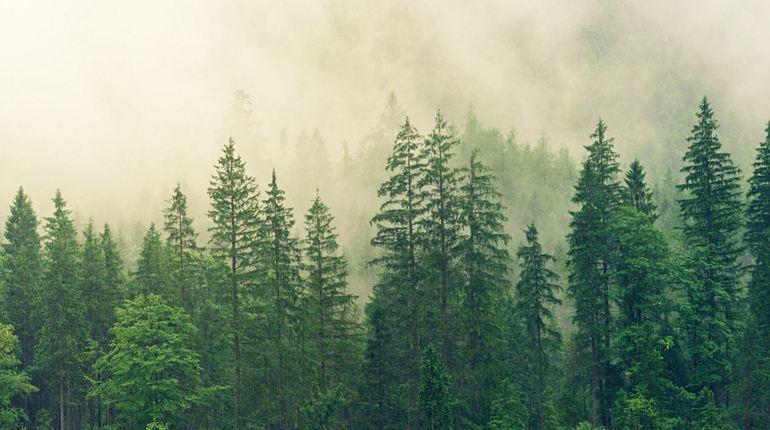 В Киришском районе прошла проверка Комитета государственного экологического надзора Ленобласти после обращений граждан о свалке древесных отходов на землях лесного фонда.