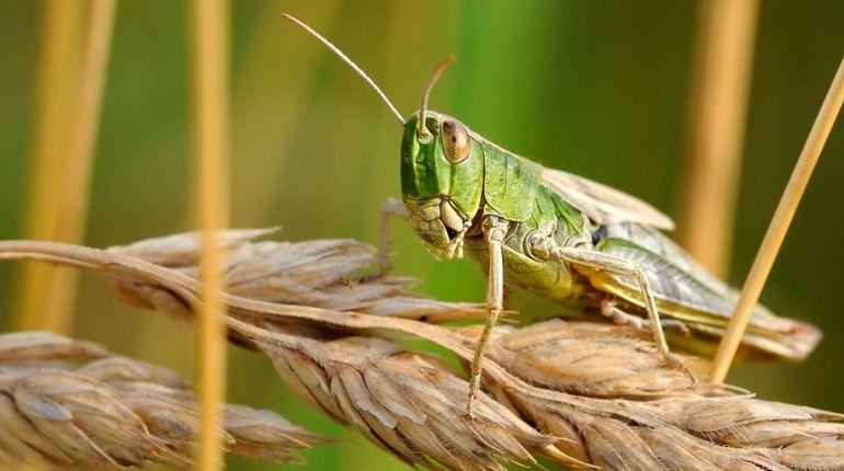 Глобальное потепление породит полчища голодные насекомых