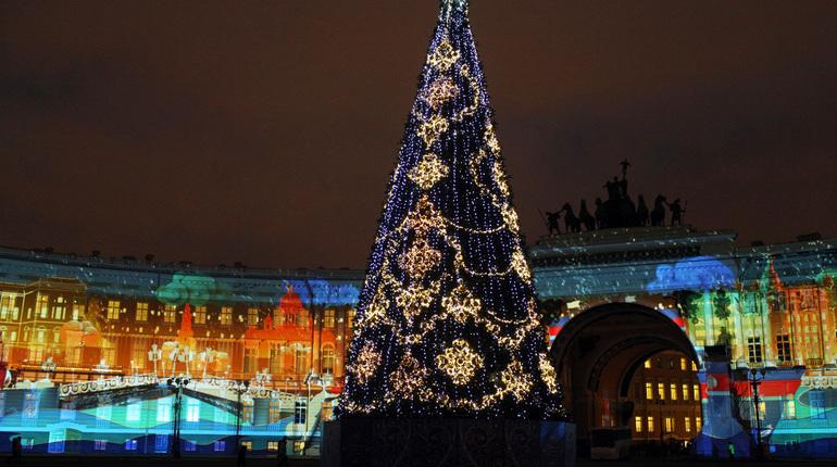 Петербуржцы требуют вернуть живую ель на Дворцовую площадь