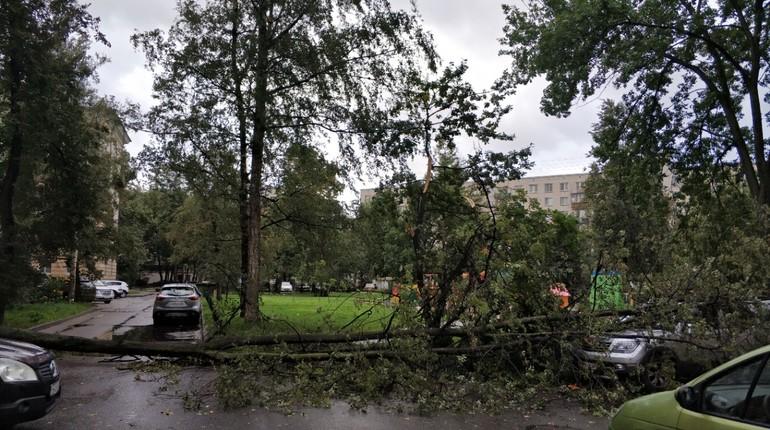 Штормовой ветер в Петербурге начал валить деревья.