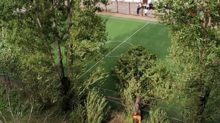Упавшее дерево прервало урок физкультуры во дворе школы на проспекте Стачек, 21. О ЧП сообщили очевидцы в социальных сетях.