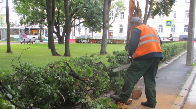 В Петербурге садовники ликвидировали последствия шторма. Ветер, скорость которого достигала 25 м/с, закрыл в городе сады и парки.