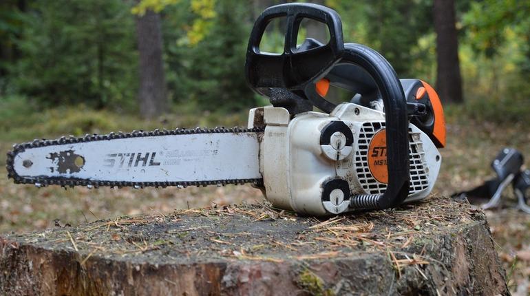 Петербуржец заплатит 300 тысяч за вырубленные деревья