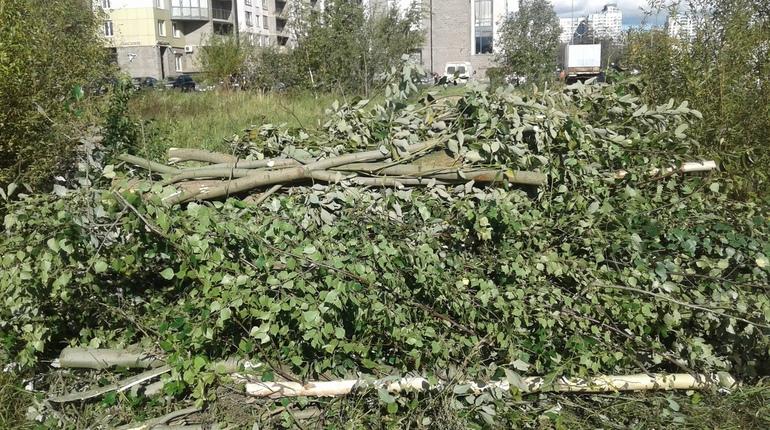 В устье реки Смоленки в Петербурге рабочие начали расчищать место для будущей строительной площадки. Местным жителям, которые выступают против строительства апарт-отелей и за создание парка, отказались выдать порубочный билет.