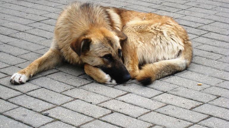 Кастрация или усыпление: бродячих собак хотят лишить достоинства