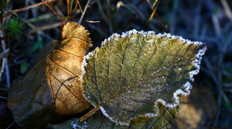 Завтра в Ленобласти ожидается достаточно прохладная погода, синоптики не исключают появления заморозков. Также 25 сентября будут наблюдаться сильные порывы ветра, которые могут достигнуть 15 м/с.