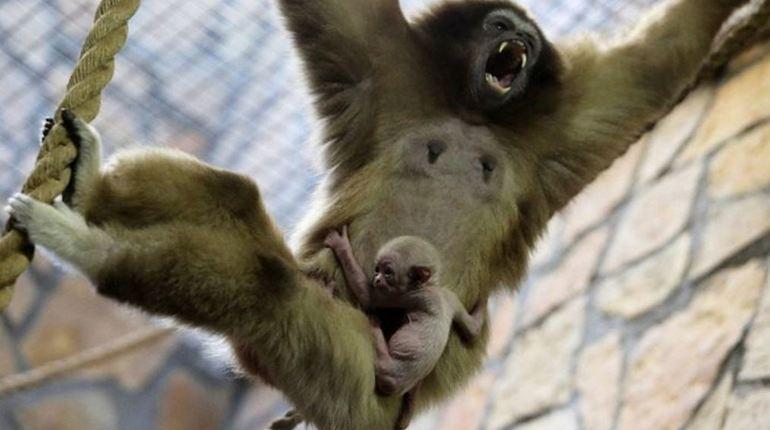 В Сестрорецке может появиться новый зоопарк