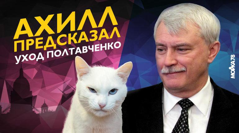 Что будет с котом Ахиллом, предсказавшим уход Полтавченко
