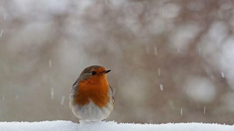Завтра в Ленобласти выпадет первый снег