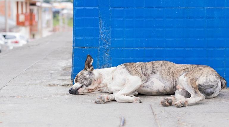 В Петербурге могут запретить выпускать отловленных бродячих собак и кошек обратно на улицу. Признать недействительными региональные нормы, регулирующие вопрос безнадзорных животных, через суд пытается жительница города. Против выступают чиновники и зоозащитники. Но этого, как показывает опыт, бывает недостаточно.