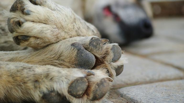 Суд в Петербурге постановил не отпускать на волю собак после стерилизации