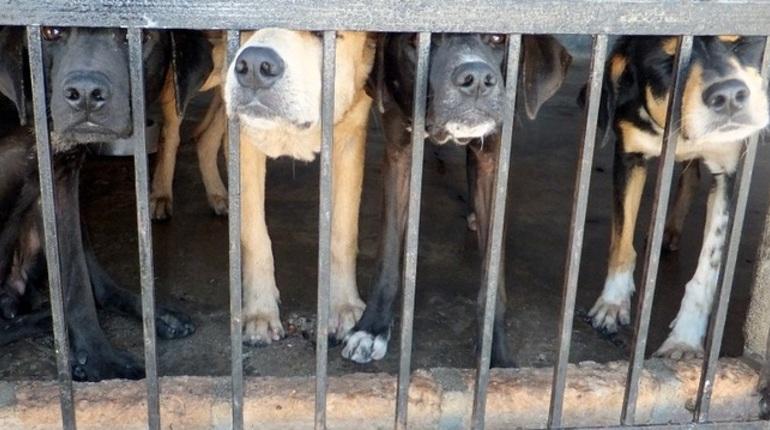 Администрация Петербурга теперь не знает, что делать с бродячими собаками