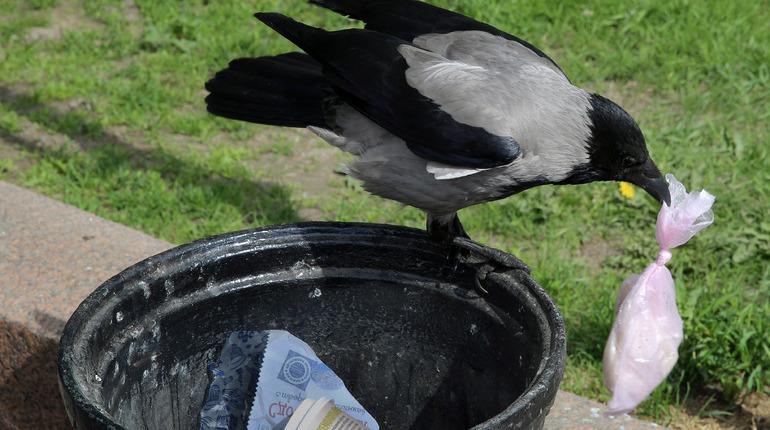 Петербургских бизнесменов хотят частично освободить от уплаты налогов, если они займутся переработкой мусора. С такой инициативой в среду, 10 октября, выступил депутат Александр Тетердинко на заседании городского парламента.